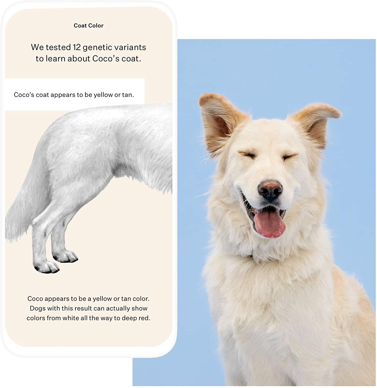 Wisdom Panel Essential Dog Traits
